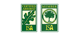 ISA Certified Arborist - Green Forest Tree Service 3 (1)