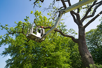 Green Forest Tree Service - Tree Services - Tree Trimming & Pruning