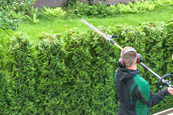Green Forest Tree Service - Tree Services - commercial tree services