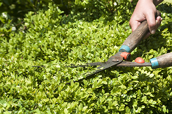 Green Forest Tree Service - Tree Services - shrub pruning
