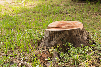Green Forest Tree Service - Tree Services - Stump Grinding & Removal